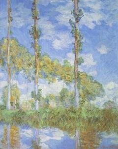 Poplars in the Sun