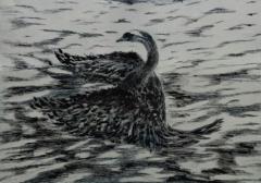 Swan in Solitude